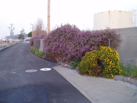 flowering-bushes2.jpg