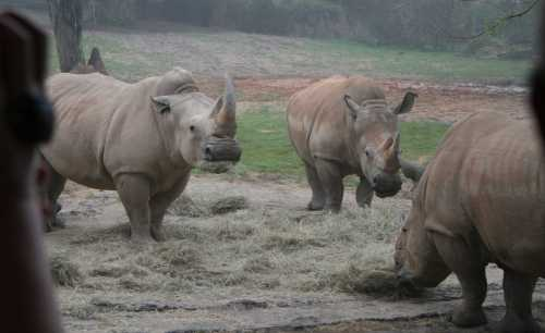 img_0143-3-rhinos