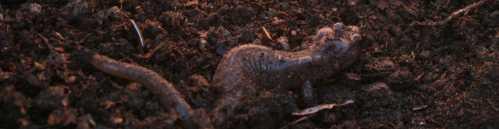 20090412_0244-salamander-shade-1