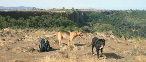 20090601_0363 dogs on ridge