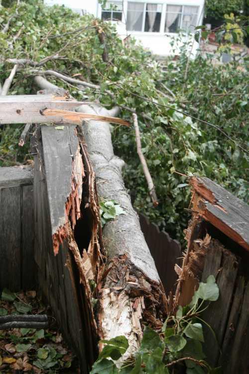 20091014_0466 fallen branch from kids house