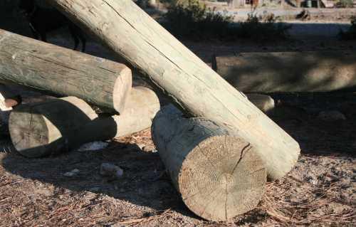 20091004_0453 sunlit logs