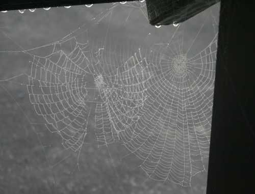 20091101_0515 two webs interposed