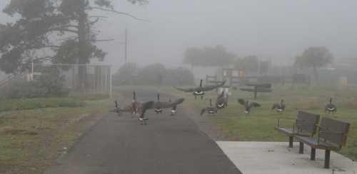 20091101_0522 flock departing