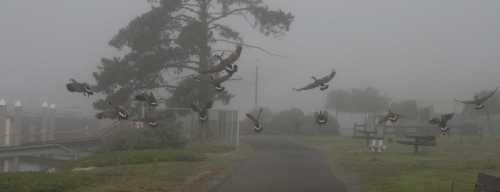 20091101_0523 flock airborne