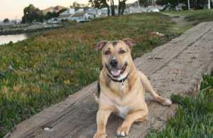 Ernie on boards_Jan 09
