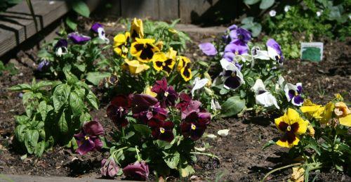1043 Robs flowers