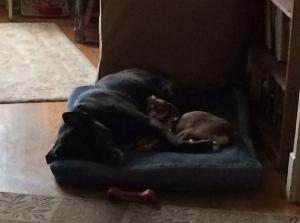 Edie and Nora sleeping